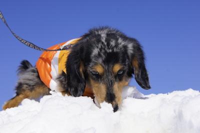 インフルな人と元気な犬_f0195891_20235255.jpg