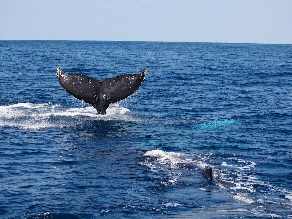 2/23 ザトウクジラ全島一斉調査結果_a0010095_18345988.jpg