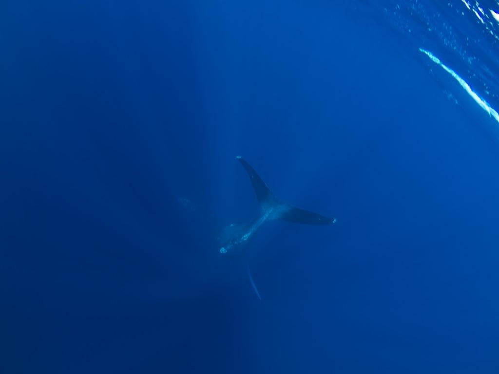 2/23 ザトウクジラ全島一斉調査結果_a0010095_20433561.jpg