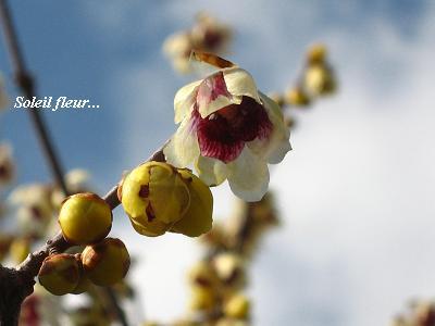 希望をくれる、早春の花たち・・・☆_c0098807_1932457.jpg