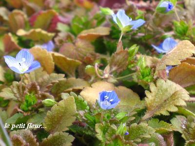 希望をくれる、早春の花たち・・・☆_c0098807_19444122.jpg