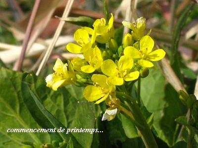 希望をくれる、早春の花たち・・・☆_c0098807_1952381.jpg