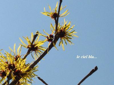 希望をくれる、早春の花たち・・・☆_c0098807_1985521.jpg