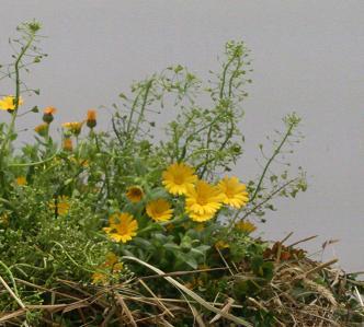 希望をくれる、早春の花たち・・・☆_c0098807_20183499.jpg