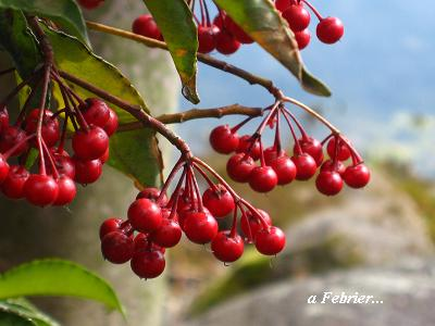 希望をくれる、早春の花たち・・・☆_c0098807_20281523.jpg
