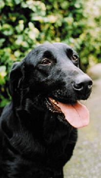 がん探知犬_e0162117_1894962.jpg