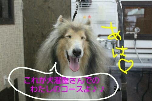 b0130018_16592065.jpg