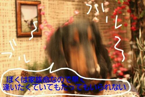 b0130018_172968.jpg
