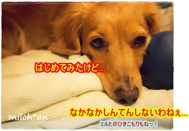 b0115642_2330363.jpg