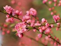 春の生徒募集と、お琴体験生の受付を開始いたします。_b0299052_2044912.jpg