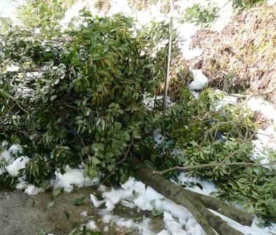 どっさりと、来冬の薪に・・・。_f0177373_19301473.jpg