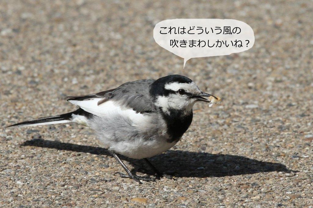 b0174191_1905932.jpg