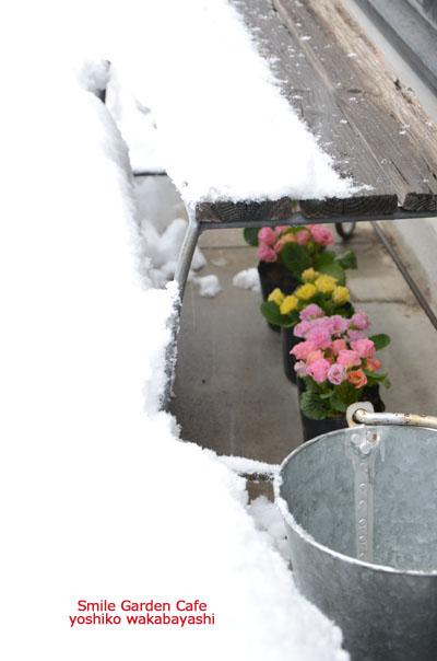 雪のシャーベット_b0308096_17131613.jpg