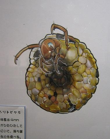 たまごの工房企画展 第4回 - mozo mozo - 虫・蟲 展 その7_e0134502_13041892.jpg