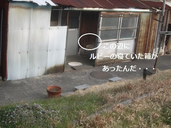 f0143123_2034686.jpg