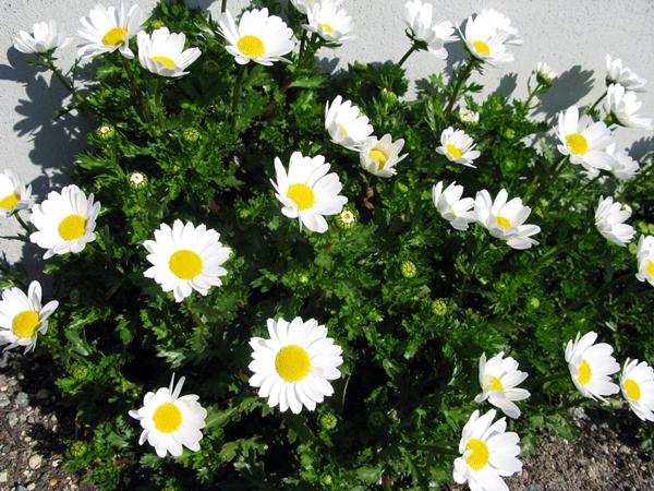 初春の庭_f0129726_22353098.jpg