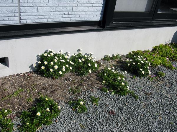 初春の庭_f0129726_22375831.jpg