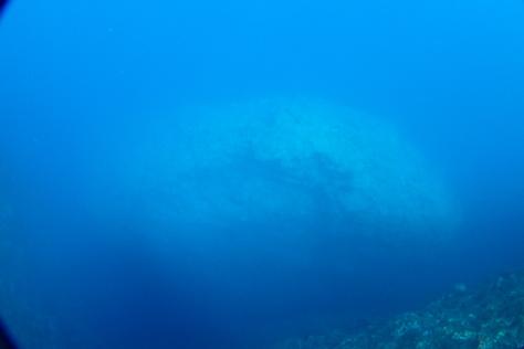 天気も海も良いから調査ダイブへ_c0070933_22063740.jpg