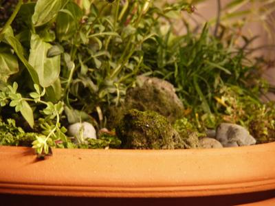 Pots inspired by William Morris 3 Love birds pot_d0229351_1993372.jpg