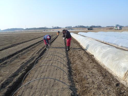 「農作業の様子」_c0214657_12291641.jpg