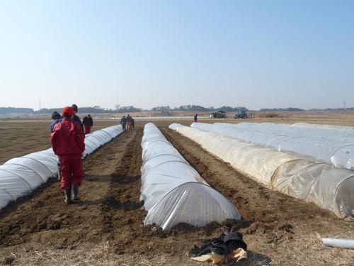「農作業の様子」_c0214657_12293920.jpg