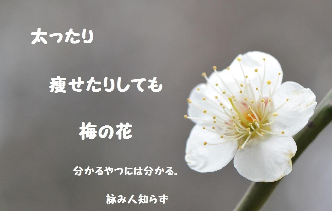 c0002260_10301681.jpg