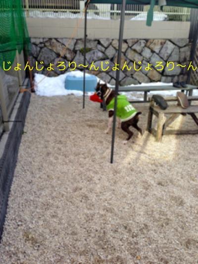 f0177261_2312419.jpg