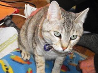 ネコと初対面_e0195766_13412754.jpg
