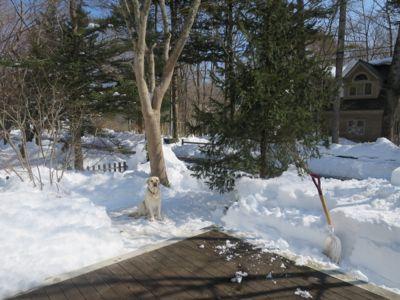 雪かきにお勧めな2つ!_d0133485_914474.jpg
