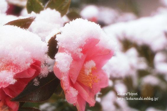 吹雪の川越っ!!_f0299486_1915165.jpg