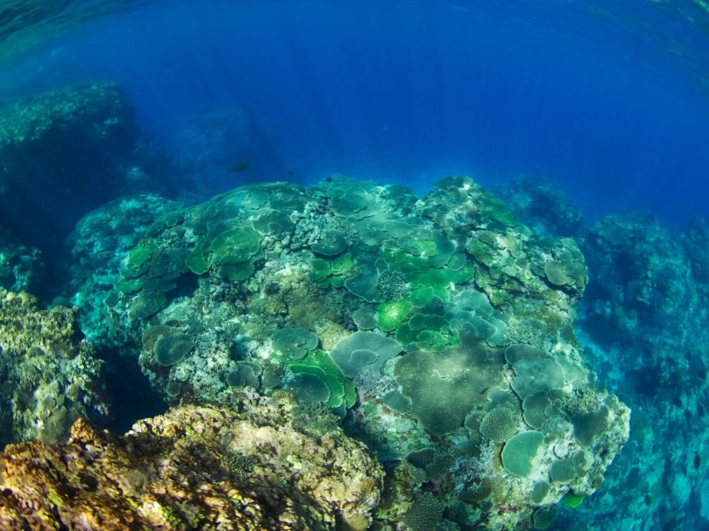 2/24 サンゴ調査_a0010095_21564990.jpg