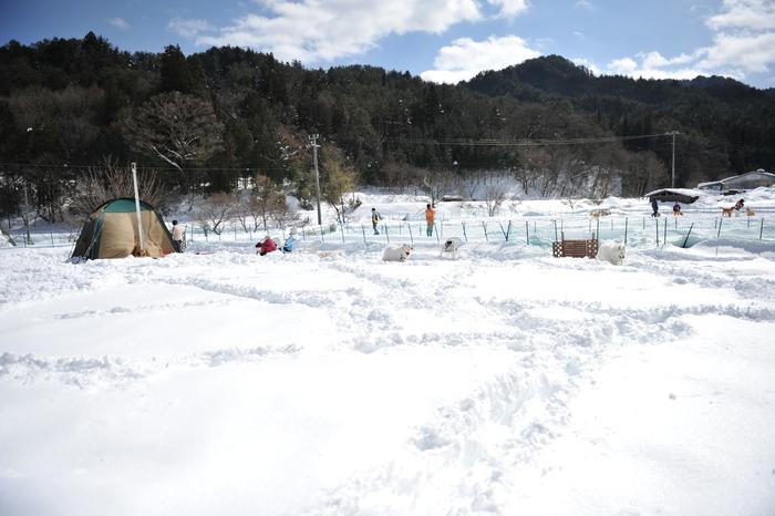 雪中キャンプ in WAN-WA 第2弾 PART2_a0049296_20373113.jpg