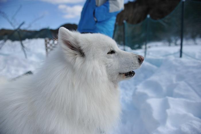 雪中キャンプ in WAN-WA 第2弾 PART2_a0049296_2038143.jpg