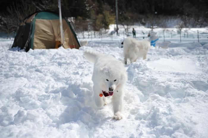 雪中キャンプ in WAN-WA 第2弾 PART2_a0049296_20383748.jpg