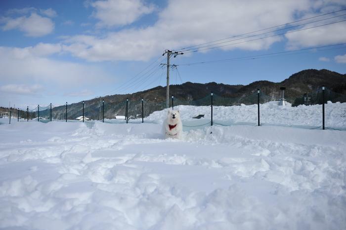雪中キャンプ in WAN-WA 第2弾 PART2_a0049296_2039879.jpg