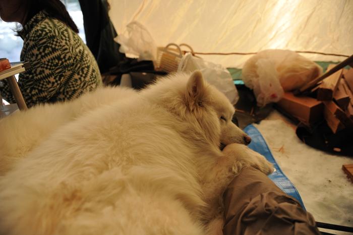雪中キャンプ in WAN-WA 第2弾 PART2_a0049296_20411868.jpg