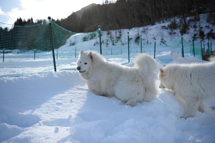 雪中キャンプ in WAN-WA 第2弾 PART2_a0049296_20431981.jpg
