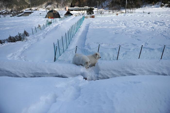 雪中キャンプ in WAN-WA 第2弾 PART2_a0049296_20444279.jpg