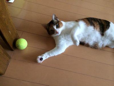 テニス復帰_d0260803_12583160.jpg