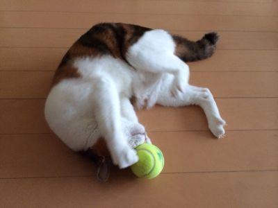 テニス復帰_d0260803_12583279.jpg