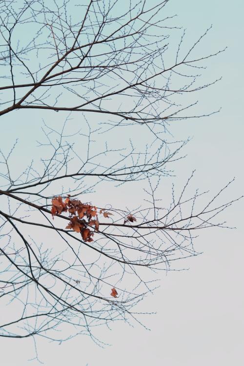 Wintry landscape._c0200027_21113849.jpg