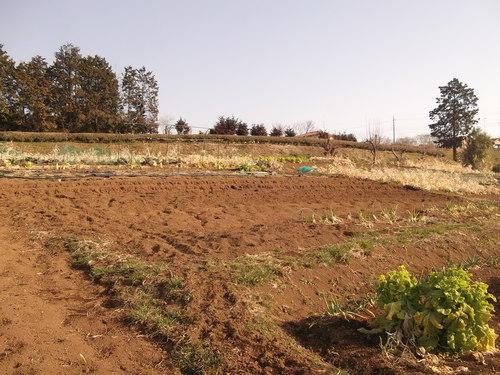 ジャガイモの植え付け準備完了!_b0137932_17552530.jpg