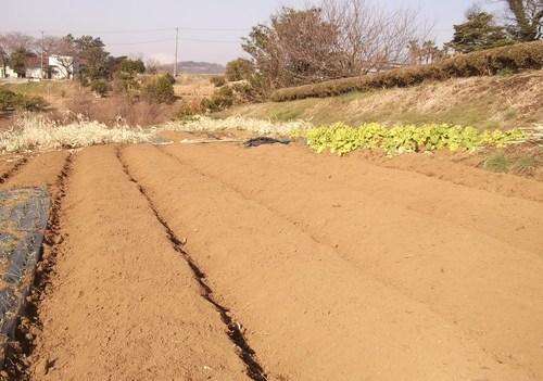 ジャガイモの植え付け準備完了!_b0137932_17555293.jpg