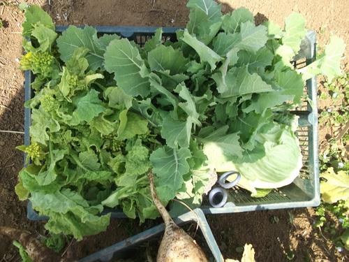 ジャガイモの植え付け準備完了!_b0137932_17562435.jpg