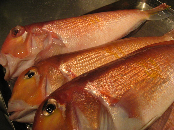 山口県萩産の甘鯛、こりゃすごい。釣りものです。&2月26日(水)のランチメニュー_d0243849_064039.jpg
