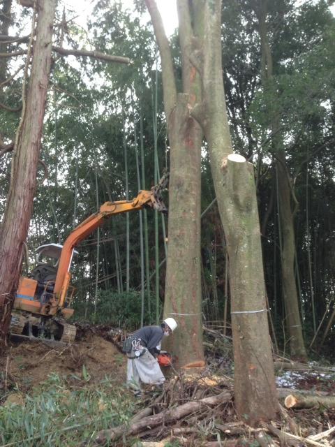 ケヤキの木を切りました。_b0283089_20174363.jpg