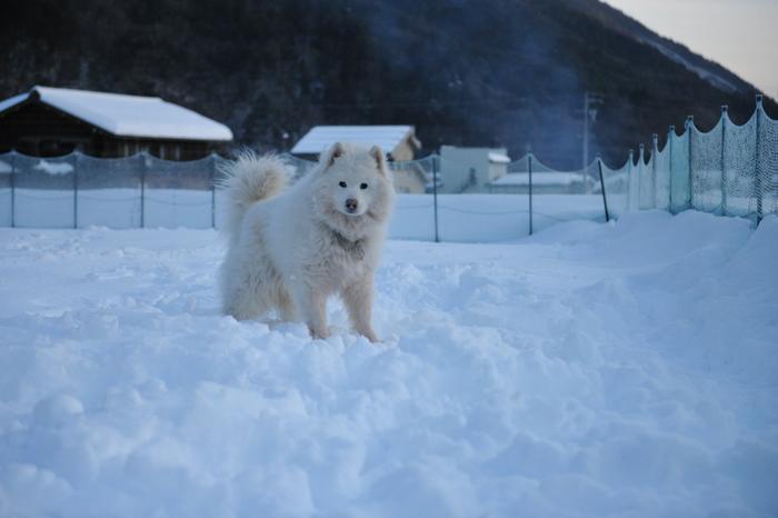雪中キャンプ in WAN-WA 第2弾 PART3_a0049296_20372356.jpg