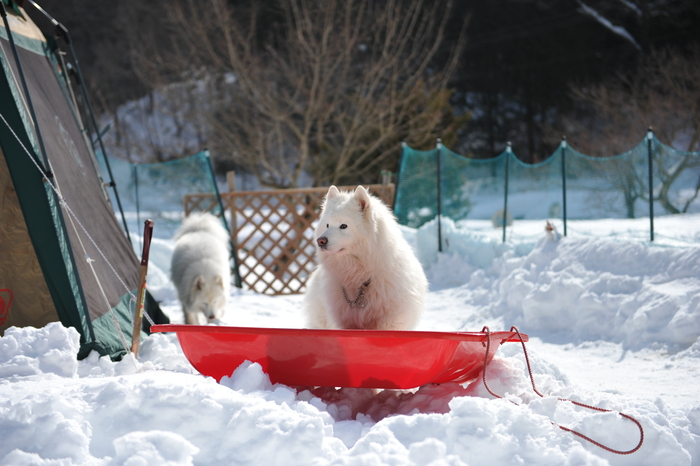 雪中キャンプ in WAN-WA 第2弾 PART3_a0049296_20413041.jpg
