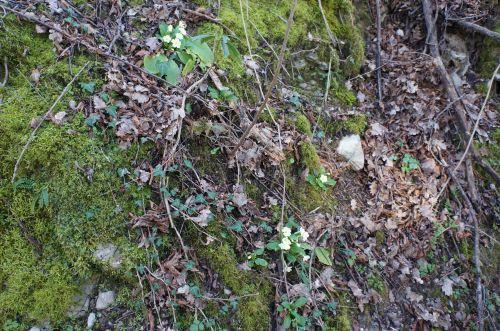 春が近づいています_f0106597_16411241.jpg