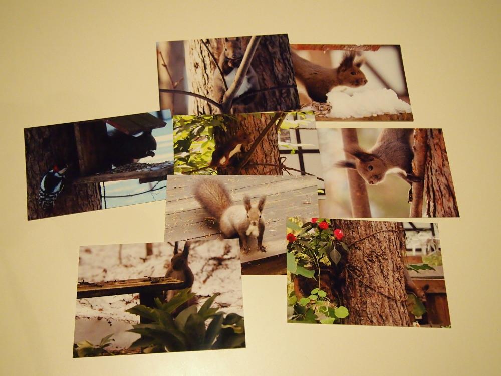 「エゾリス君ポストカード第5集」8枚が出来上がりました。_f0276498_23515544.jpg